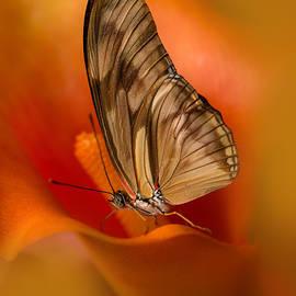 Jaroslaw Blaminsky - Brown Butterfly on Calia flower