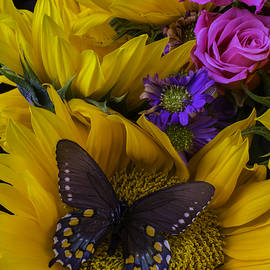 Brown Butterfly On Sunflower - Garry Gay