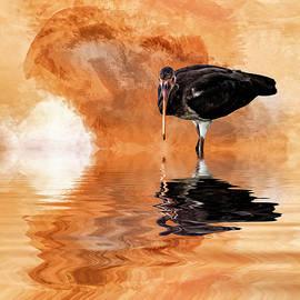Cyndy Doty - Brown Ibis