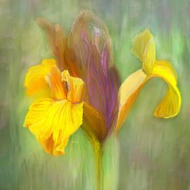 Angela A Stanton - Brown Iris
