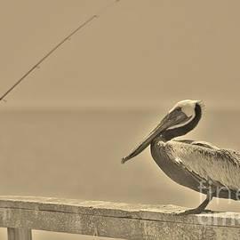 Bob Sample - Brown Pelican In Sepia
