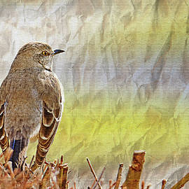 Geraldine Scull - Brown Thrasher with textures
