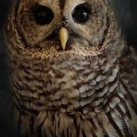 Jai Johnson - Brownsville Barred Owl