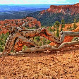 Allen Beatty - Bryce Canyon 45 - Sunrise Point