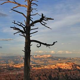 Mo Barton - Bryce Canyon Dead Tree Sunset 3