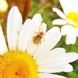 Honey Behrens - Buggin