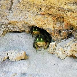 Al Powell Photography USA - Bullfrog Bunker