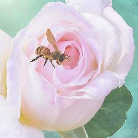 Janette Boyd - Bumble Bee on Pastel Pink Rose