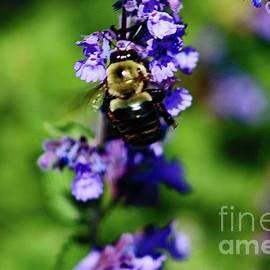 Bumbling Bee 2