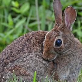 Ronda Ryan - Bunny demure