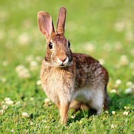 Brian Manfra - Bunny Hop