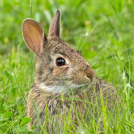 Natural Focal Point Photography - Badlands Bunny