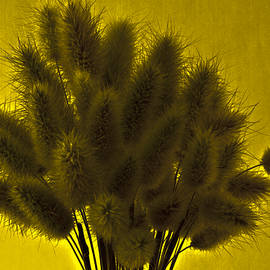 Sandra Foster - Bunny Tail Grasses