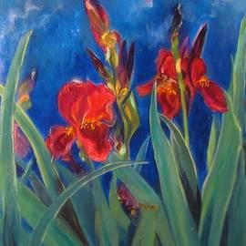 Rafaela Stoeckley - Burgundy Irises