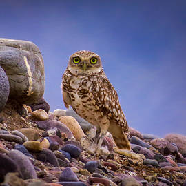Ed  Cheremet - Burrowing Owl on the Rivers Edge