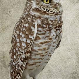 Wes and Dotty Weber - Burrowing Owl Portrait D9384