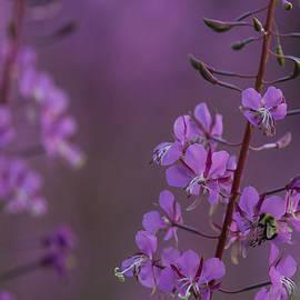 Andrew Santoro - Busy Bee