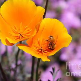 Craig Corwin - Busy Bee
