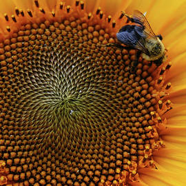 Mike Martin - Busy Bee
