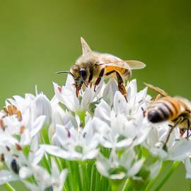 Joshua Spiegler - Busy Bees