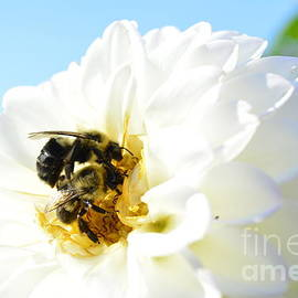 Stephanie  Varner - Busy Bee