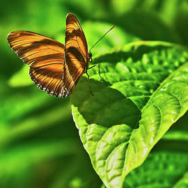 Mark Fuge - Butterfly 1