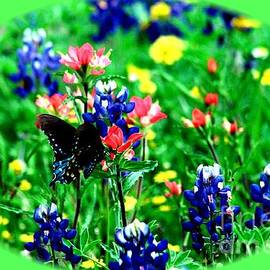 Larry Weingartner - Butterfly and  Bluebonnets Framed