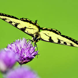 Christina Rollo - Butterfly Art Of Balance
