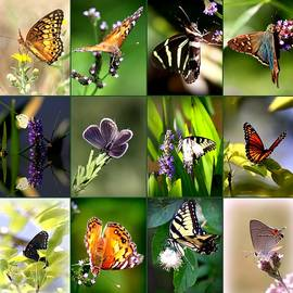 Travis Truelove - Butterfly Assortment