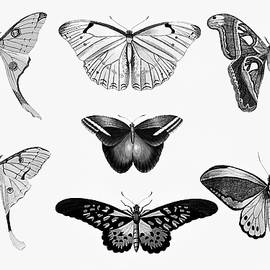 Georgiana Romanovna - Butterfly Black and White Wall Art