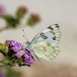 Debra Souter - Butterfly