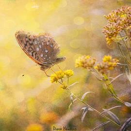 Diane Hawkins - Butterfly Dream