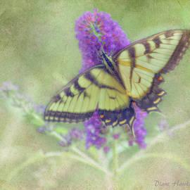 Diane Hawkins - Butterfly fantasy