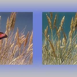 David Dehner - Butterfly Fields of Grain