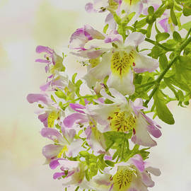 Sandra Foster - Butterfly Flowers