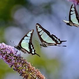 Kim Bemis - Butterfly Games