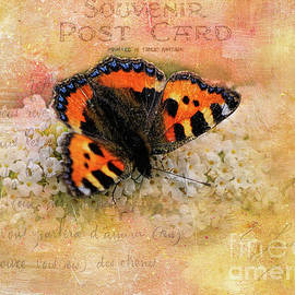 Gillian Singleton - Butterfly Heaven