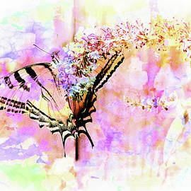 Dianne Phelps - Butterfly in Spring