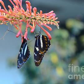 Dyana Rzentkowski - Butterfly Love