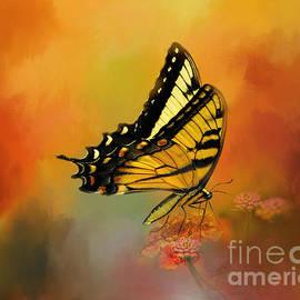 Jacque Weir - Butterfly Love