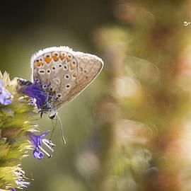 Stwayne Keubrick - Butterfly on the spot