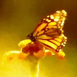 Debra Lynch - Butterfly Painting