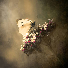 Loriental Photography - Butterfly Spirit #01