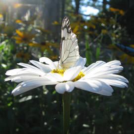 Brooks Garten Hauschild - Butterfly Sundial