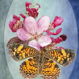 Bonnie Barry - Butterfly Sweetness