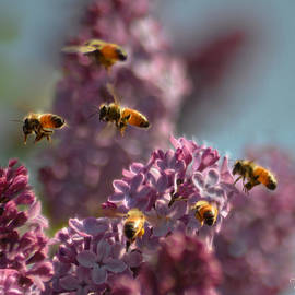 Love OurBees - Buzz About The Lilacs