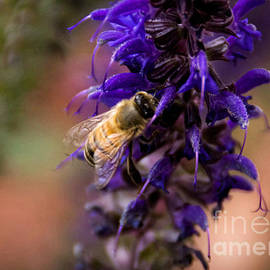 Janice Rae Pariza - Buzzing About Lavender