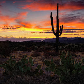 Saija Lehtonen - By The Desert Dawn Light