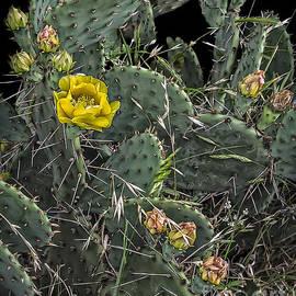 Walt Foegelle - Cactus and Flowers