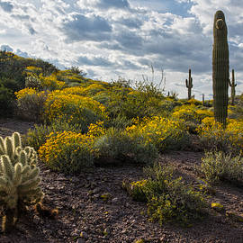 Dave Dilli - Cactus and springtime desert wildflowers.